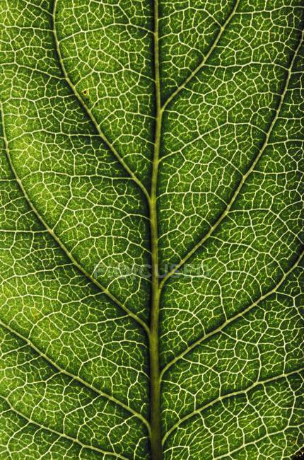 Primo piano di Green Leaf — Foto stock
