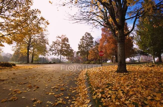 Belle vue panoramique sur le parc en automne — Photo de stock
