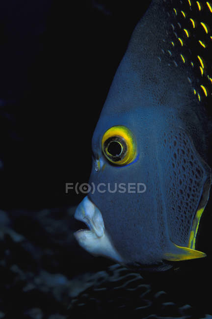 Fish under water — Stock Photo