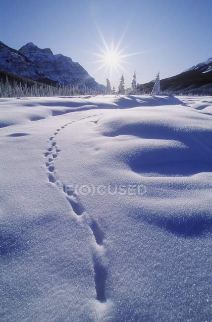 Empreintes Dans la neige sur la pente — Photo de stock
