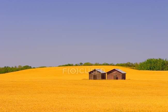 Campo de granjeros con casas pequeñas - foto de stock