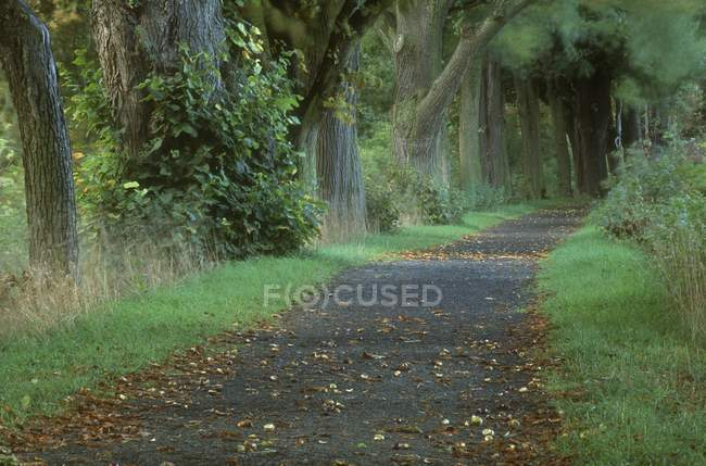 View of Woodland Path — Stock Photo