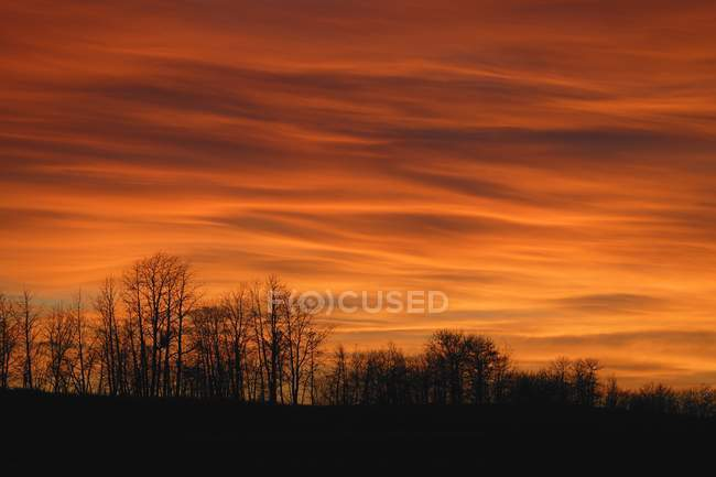 Silhouette Of Trees Against Sunset — Stock Photo
