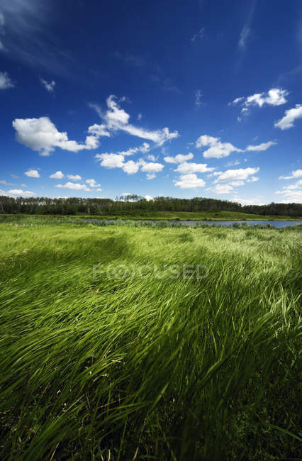 Wetlands with green grass — Stock Photo