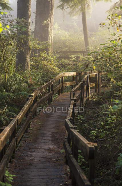 Nebel weicht Sonnenlicht im Wald auf — Stockfoto