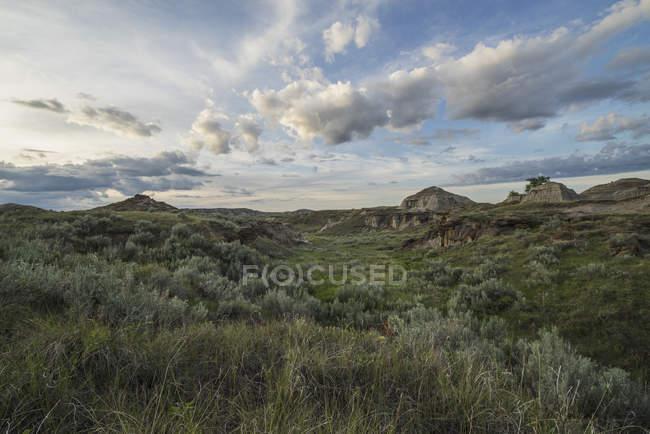 Луга на Провинциальный парк динозавров — стоковое фото