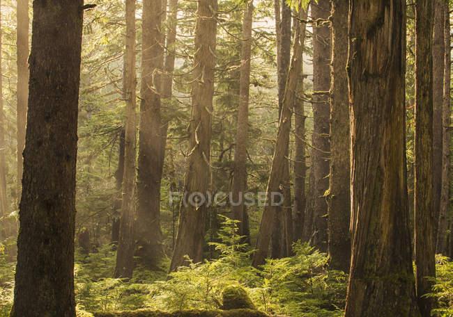 Sunlight streams through rainforest — Stock Photo