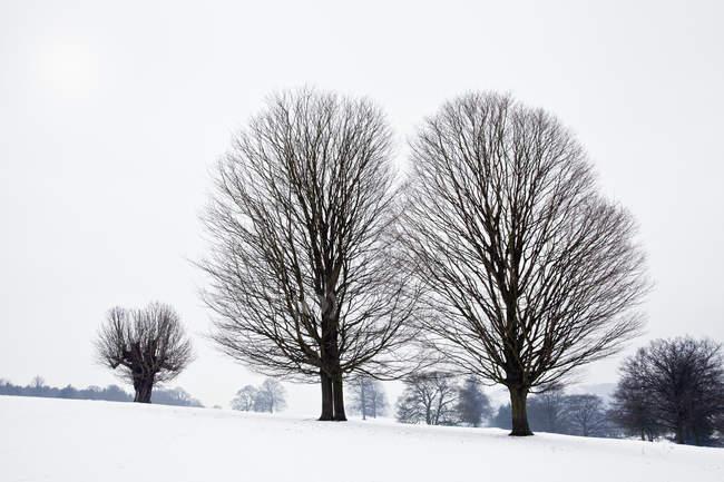Fan shaped trees — Stock Photo