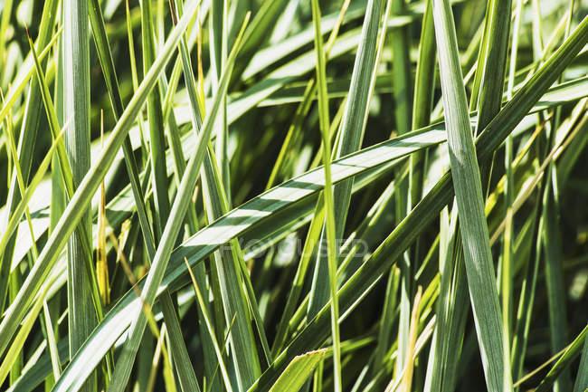 Декоративная трава обеспечивает спокойный сад — стоковое фото