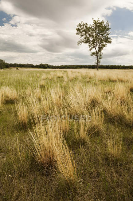 Lone tree in grassy field — Stock Photo
