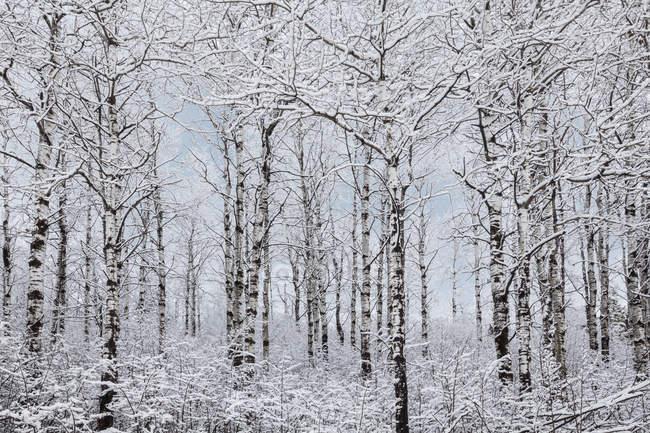 Paysage des merveilles d'hiver — Photo de stock