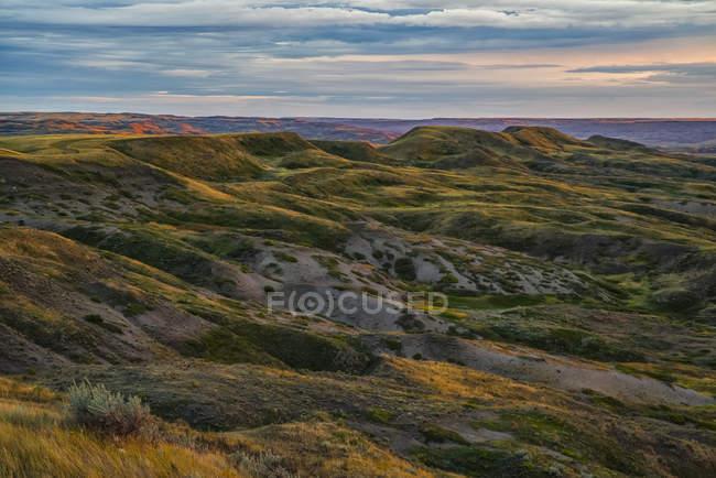 Регионе Гиллеспи лугов — стоковое фото