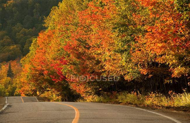 Fall Color And Country Road — Stock Photo