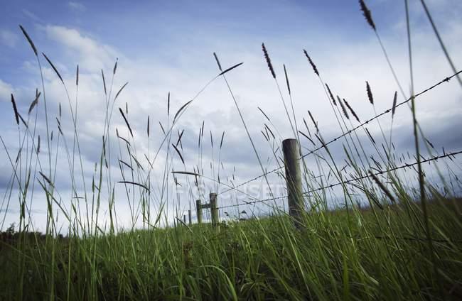 Campo herboso con cerca - foto de stock