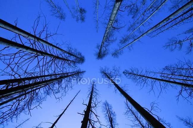 Bare Forest and sky — Stock Photo