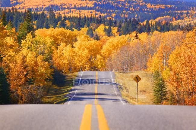 Estrada Cênica com árvores — Fotografia de Stock