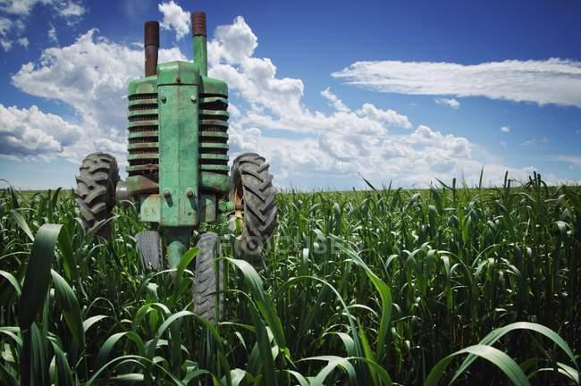 Трактор в поле на відкритому повітрі — стокове фото