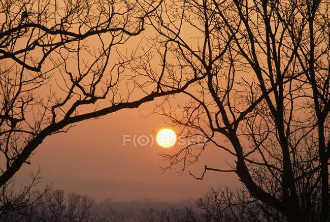 Silhouetted Bare Tree Branches — Stock Photo