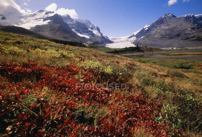 Columbia Icefield Area — Stock Photo