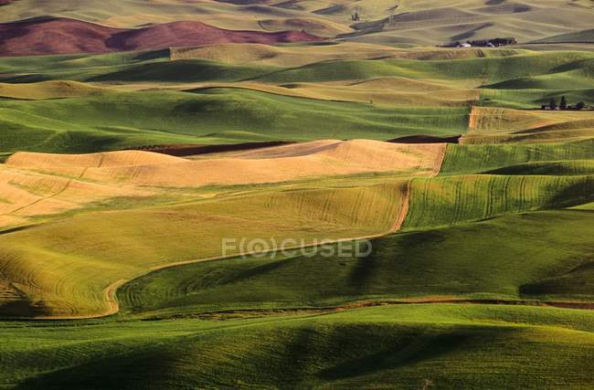 Palouse Fields during daytime — Stock Photo