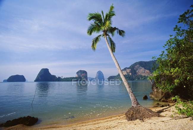 Palm Tree against water — Stock Photo