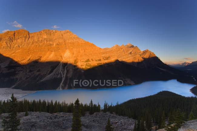 Peyto-See in Banff — Stockfoto
