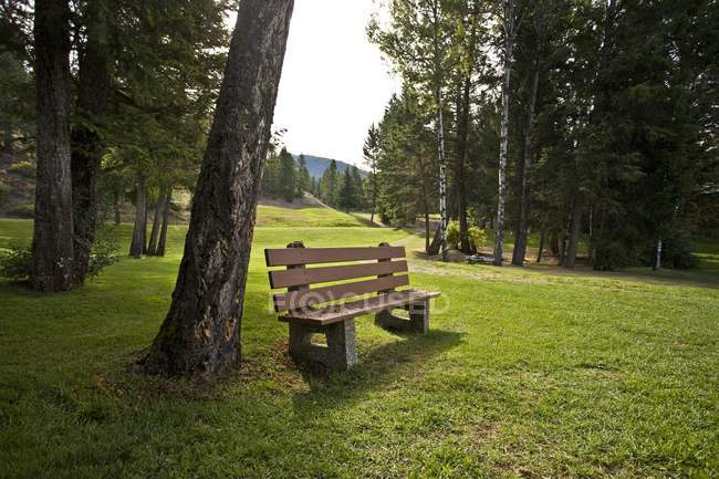Park Wooden  Bench — Stock Photo