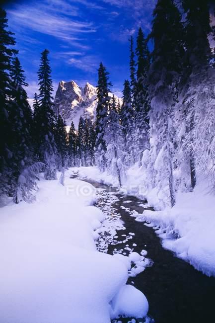 Поток и гора зимой — стоковое фото
