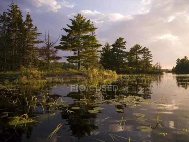 See mit Wasserpflanzen — Stockfoto