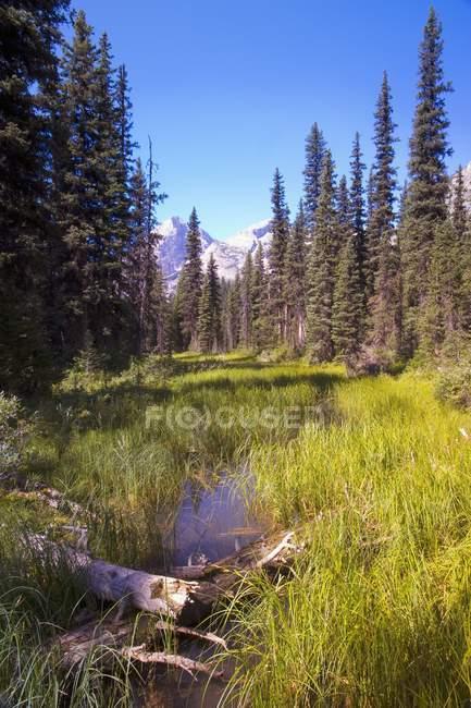 Prado com grama verde — Fotografia de Stock