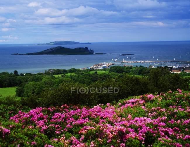 Просмотр цветов на холме — стоковое фото