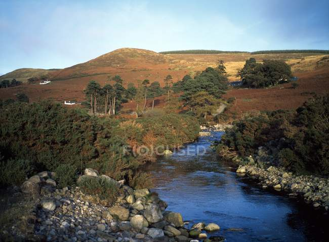 Field with water stream — Stock Photo