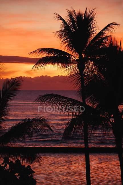 Scène tropicale avec des arbres — Photo de stock