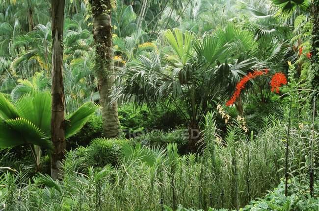 Тропічний ліс на відкритому повітрі — стокове фото