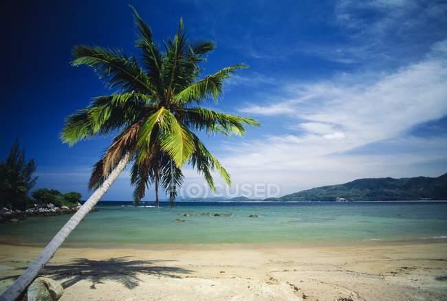 Пальмовое дерево и тропический пляж — стоковое фото