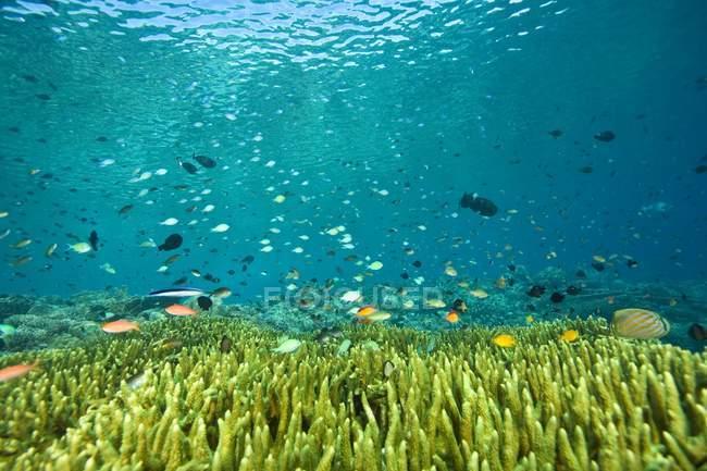 Escuela de natación de peces - foto de stock