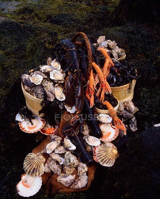 Mollusques et crustacés dans des seaux sur la rive — Photo de stock
