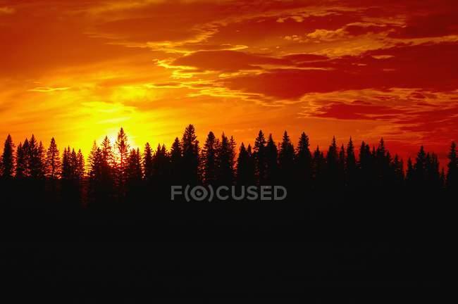 Закат над лесом — стоковое фото