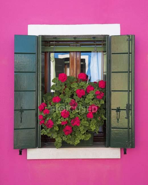 Muro rosa e persiane verdi — Foto stock