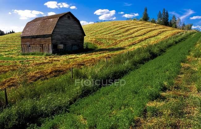 Vecchio fienile in campo — Foto stock