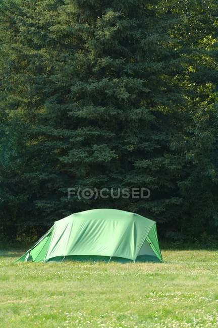 Tenda verde na floresta — Fotografia de Stock