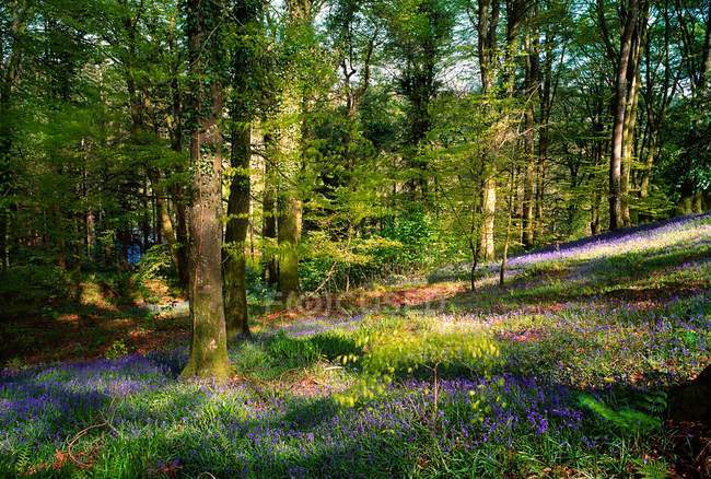 Woods In Spring during daytime — Stock Photo