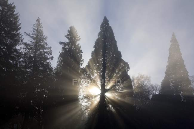 Trees In Fog, Oregon — Stock Photo