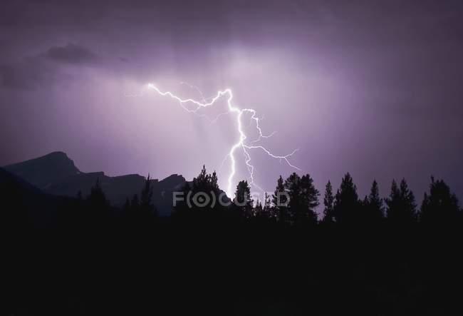 Осветляющий ударов над лесом — стоковое фото