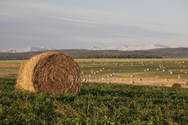 Balles de foin dans un champ avec des montagnes — Photo de stock