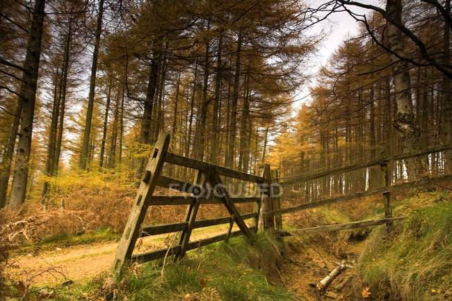 Wald mit Fußweg und Bäumen — Stockfoto