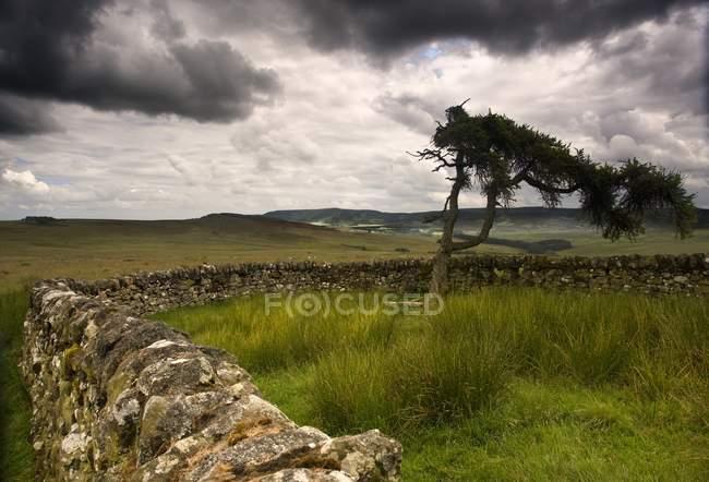 Árvore e cercas de pedra — Fotografia de Stock