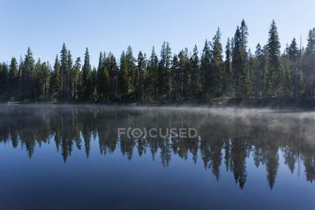 Manhã nevoeiro limpa da baía — Fotografia de Stock