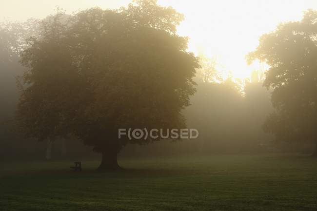 Misty Morning sopra il campo — Foto stock
