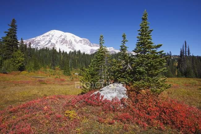 Mount Rainier und Herbstfarben — Stockfoto